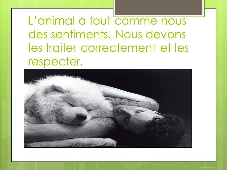 Lanimal a tout comme nous des sentiments. Nous devons les traiter correctement et les respecter.