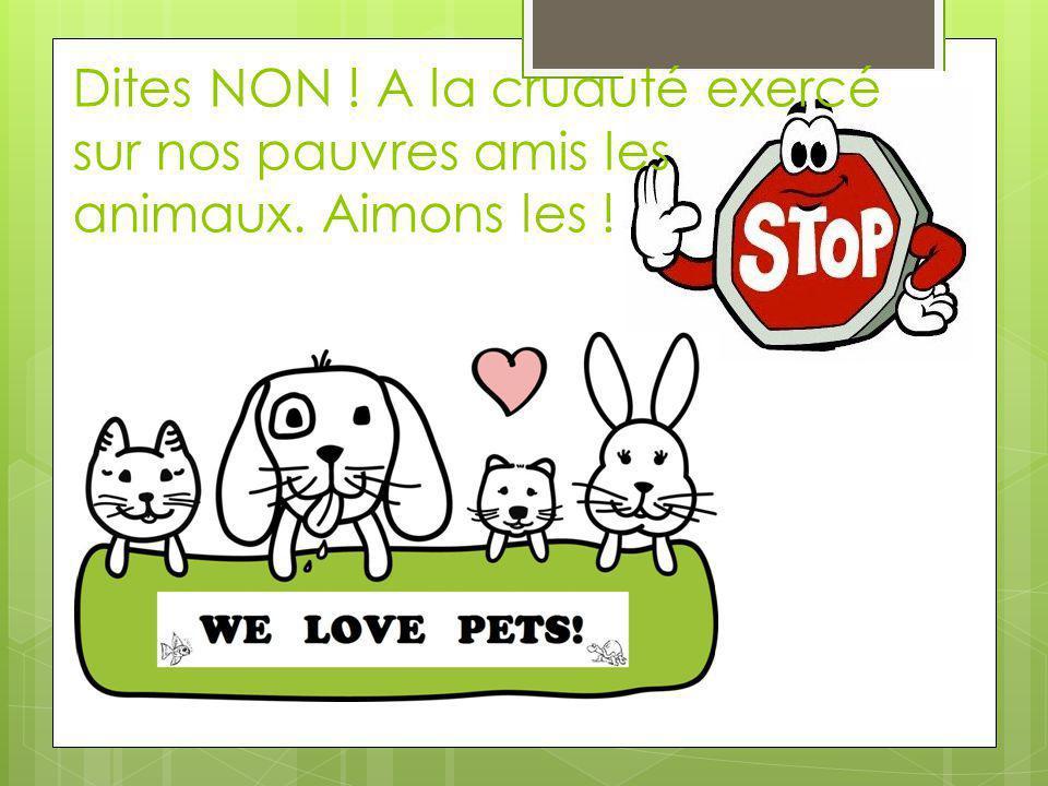 Dites NON ! A la cruauté exercé sur nos pauvres amis les animaux. Aimons les !