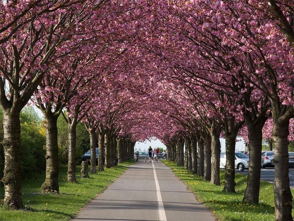 Ferme les yeux et sens, Respire l'odeur du printemps ! Ecoute le chant des oiseaux, N'y a-t-il rien de plus beau ? Tu touches le vrai bonheur Dans ce