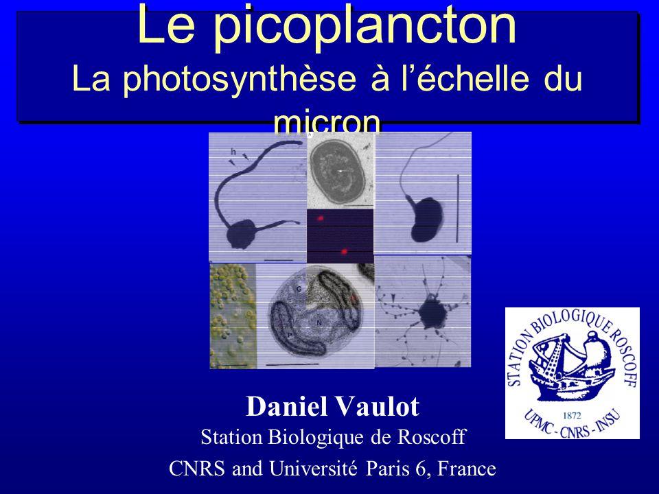 Synechococcus découvert en 1979 par J. Waterbury Prochlorococcu s découvert en 1985 par P. Chisholm