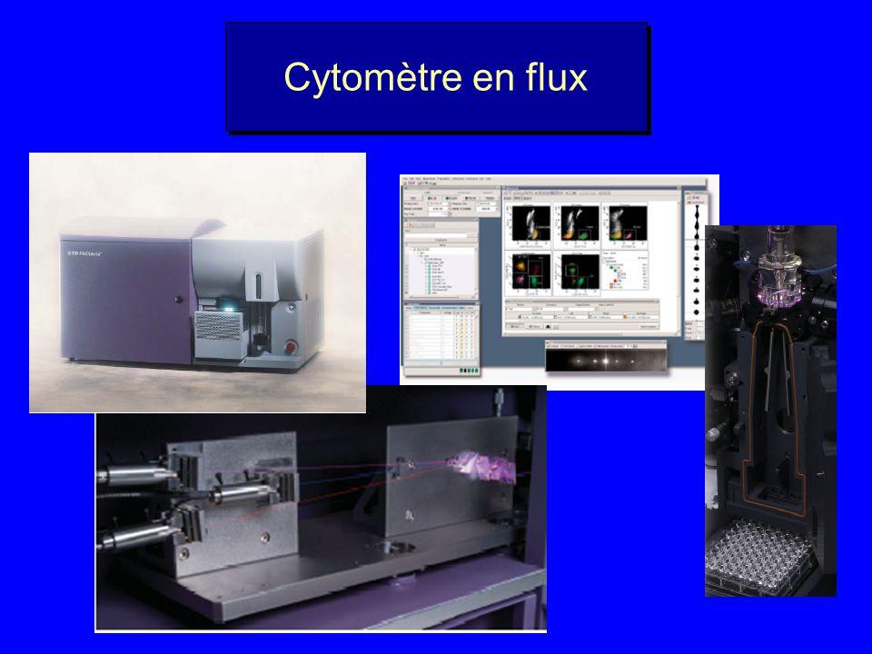 Comment étudier le picoplancton ? Microscop e électroniqu e