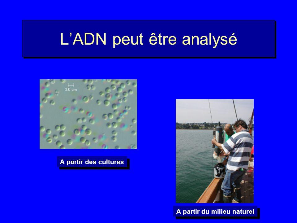 Utilisation de lADN Initialement 25 M années 50 M années
