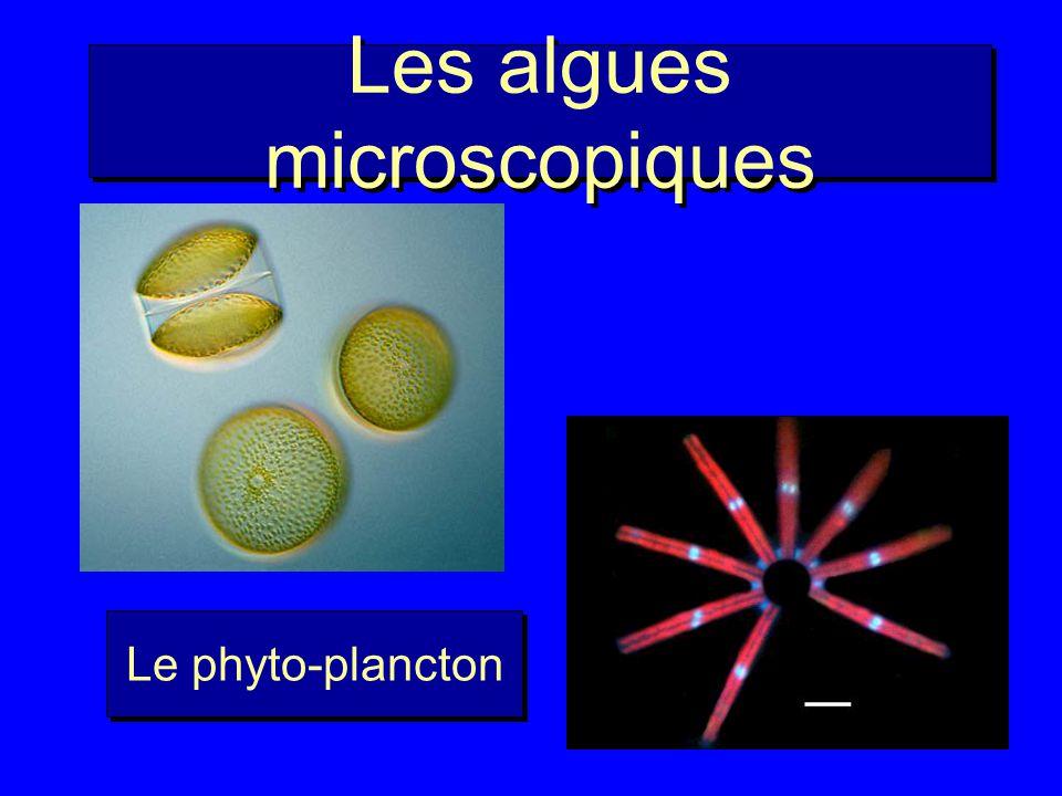 Plan Le découverte du picoplancton Comment étudier le picoplancton .
