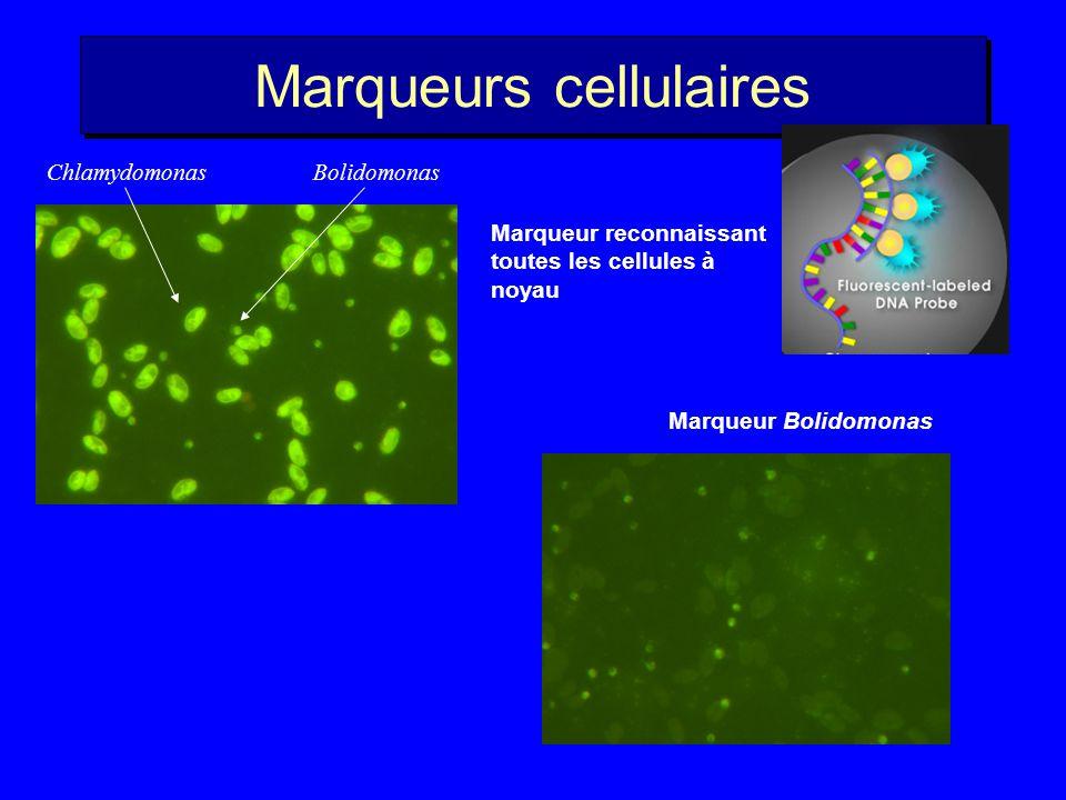 Espèces picoplanctoniques non cultivées Baldauf 2003, Science ?