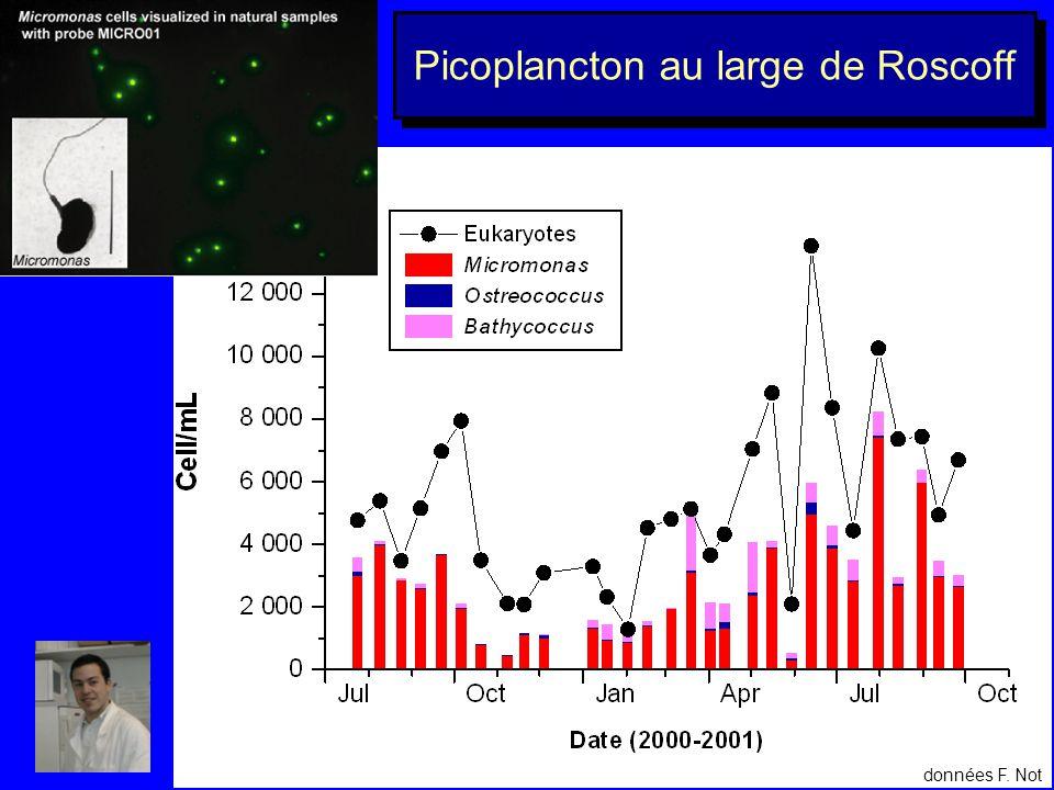 Marqueurs cellulaires Marqueur reconnaissant toutes les cellules à noyau Marqueur Bolidomonas ChlamydomonasBolidomonas
