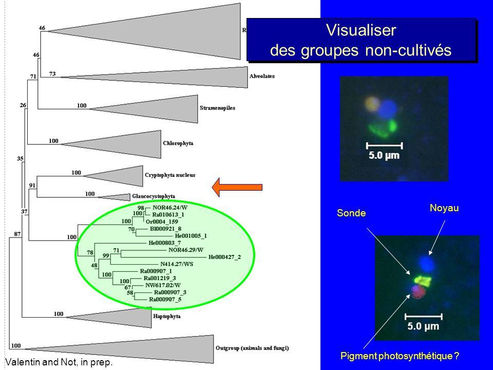 Picoplancton au large de Roscoff données F. Not