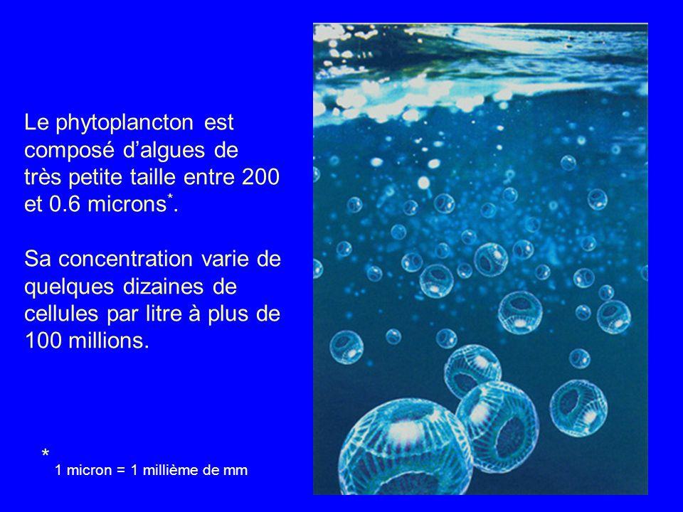 Le phytoplancton est composé dalgues de très petite taille entre 200 et 0.6 microns *.