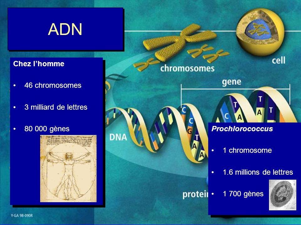 Gènes et Génomes ?