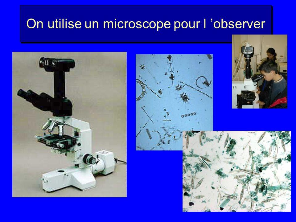 On utilise un microscope pour l observer