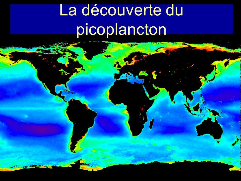 UV Synechococcus 10 000 / ml Picoeucaryotes 1 000 / ml Bactéries 1 000 000 / ml Microzooplancton 100 / ml Virus 10 000 000 / ml FerPhosphatesNitrates Prochlorococcus 100 000 / ml Vent