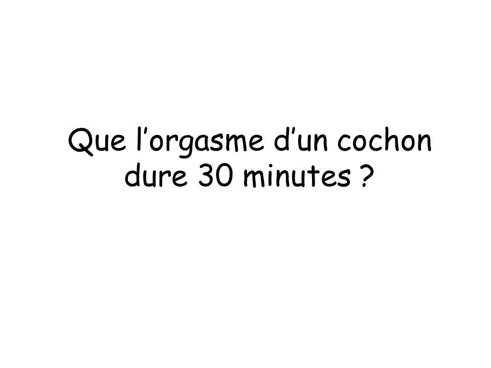 Que lorgasme dun cochon dure 30 minutes ?