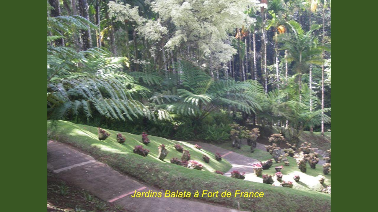 Jardins Balata à Fort de France