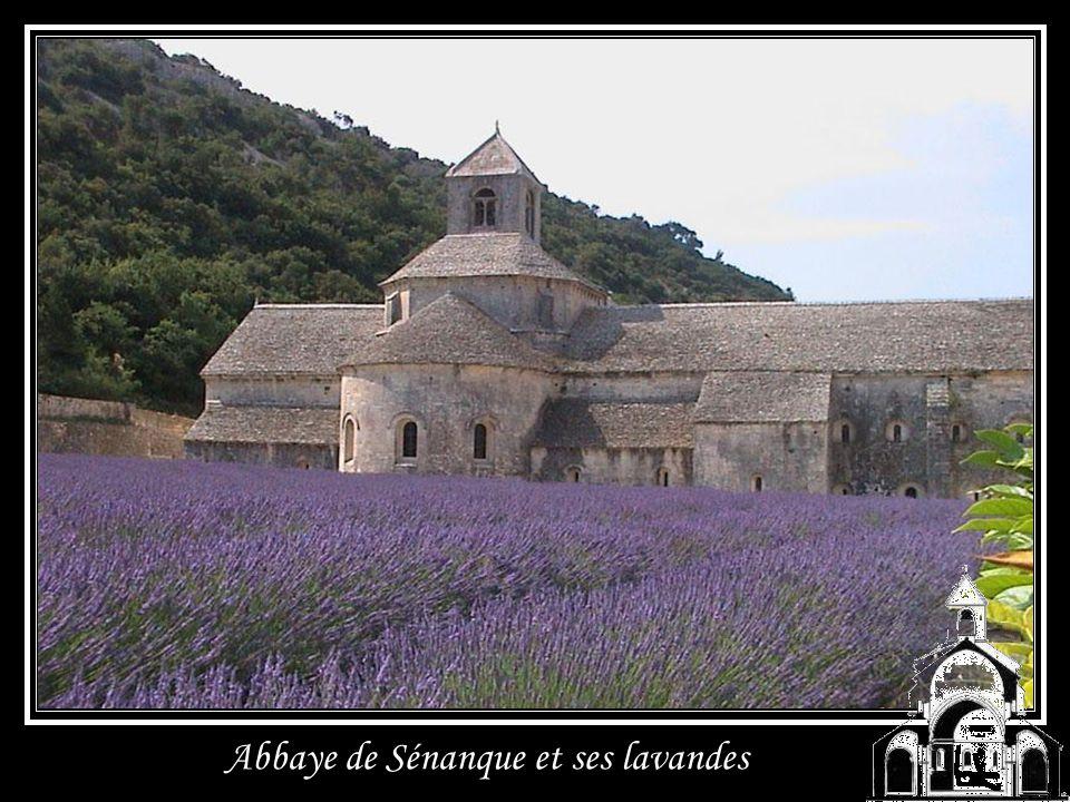 Abbaye de Sénanque en Provence