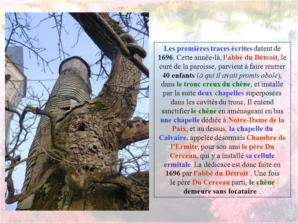 En vieillissant, l'arbre s'est creusé de l'intérieur, offrant en ses entrailles le petit mètre carré nécessaire pour une vie d'ascète.