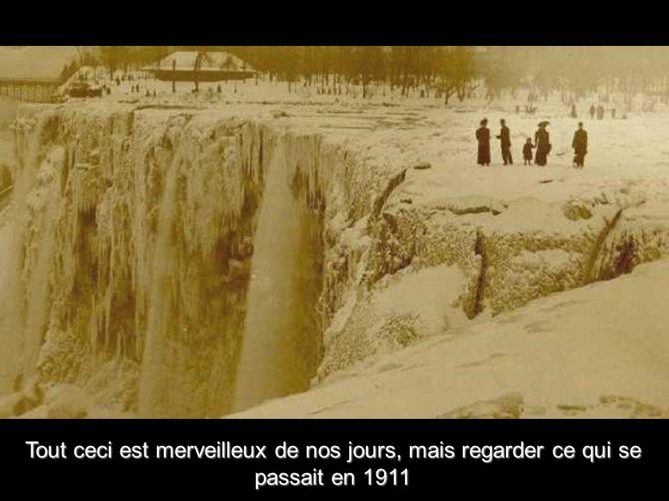 Forêt de glace