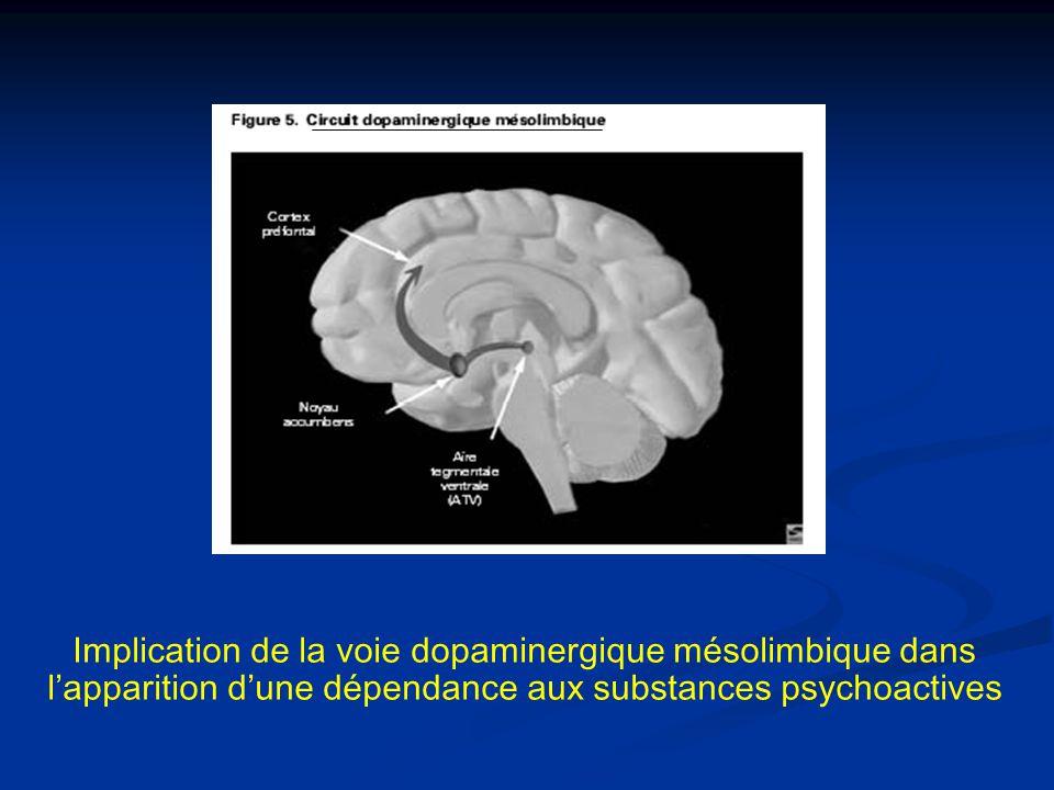 Implication de la voie dopaminergique mésolimbique dans lapparition dune dépendance aux substances psychoactives
