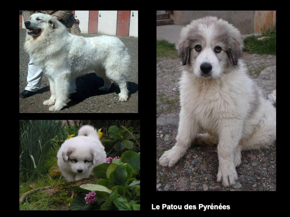 Lours réintroduit dans les Pyrénées