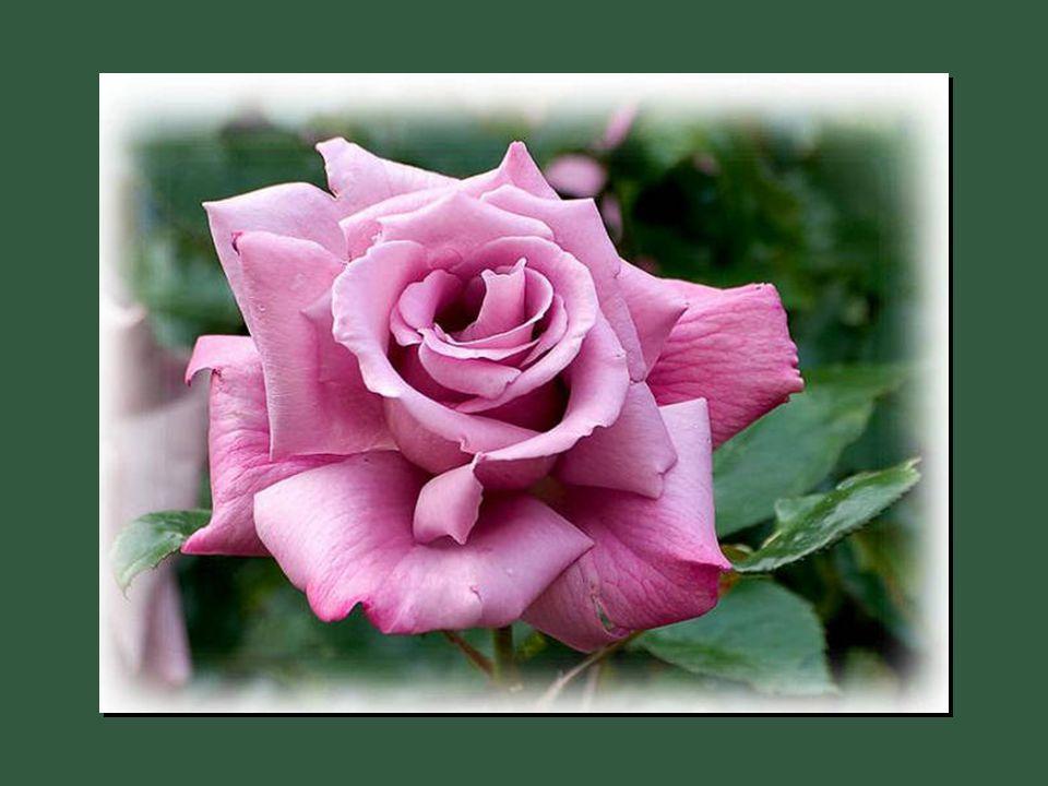 La bienveillance et la bonté du coeur sont des langages que les muets peuvent parler et que les sourds peuvent entendre.