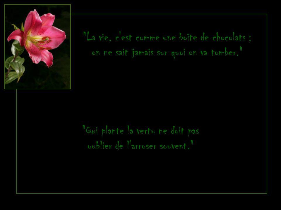 La vie, c est comme une boîte de chocolats ; on ne sait jamais sur quoi on va tomber. Qui plante la vertu ne doit pas oublier de l arroser souvent.