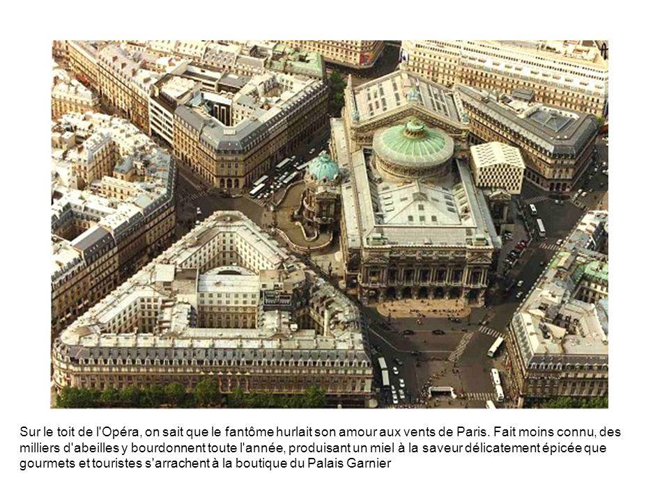 Sur le toit de l'Opéra, on sait que le fantôme hurlait son amour aux vents de Paris. Fait moins connu, des milliers d'abeilles y bourdonnent toute l'a