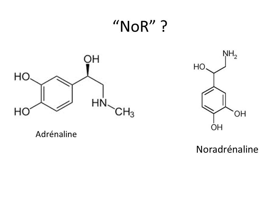 NoR ? Adrénaline Noradrénaline