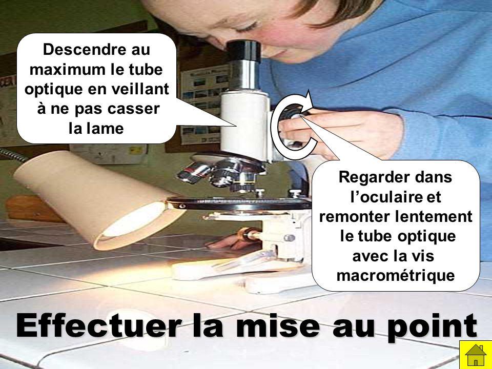 Effectuer la mise au point Descendre au maximum le tube optique en veillant à ne pas casser la lame Regarder dans loculaire et remonter lentement le tube optique avec la vis macrométrique