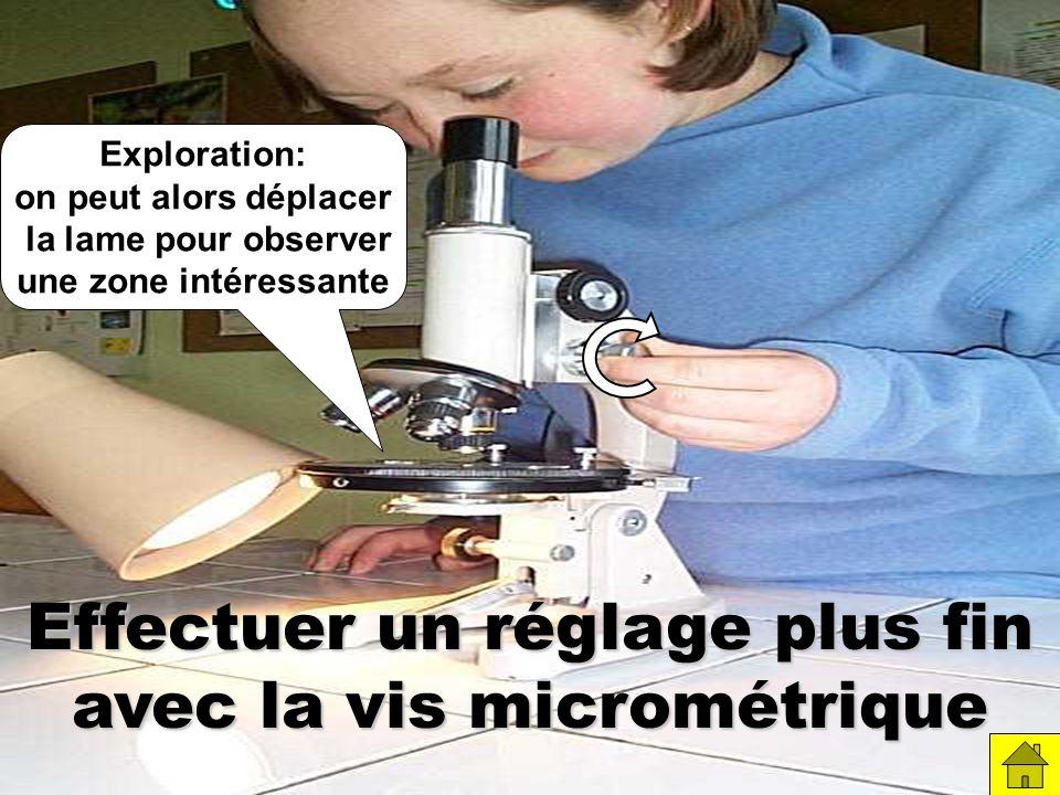 Effectuer un réglage plus fin avec la vis micrométrique Exploration: on peut alors déplacer la lame pour observer une zone intéressante