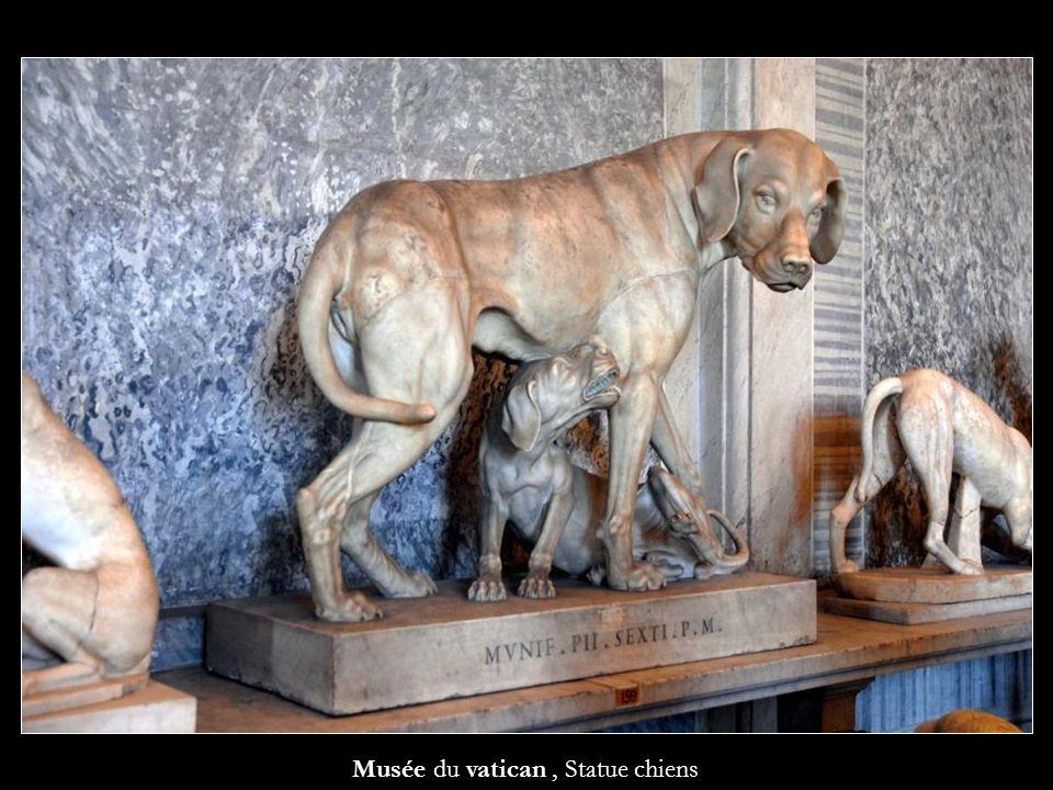Musée du vatican, Statue chiens