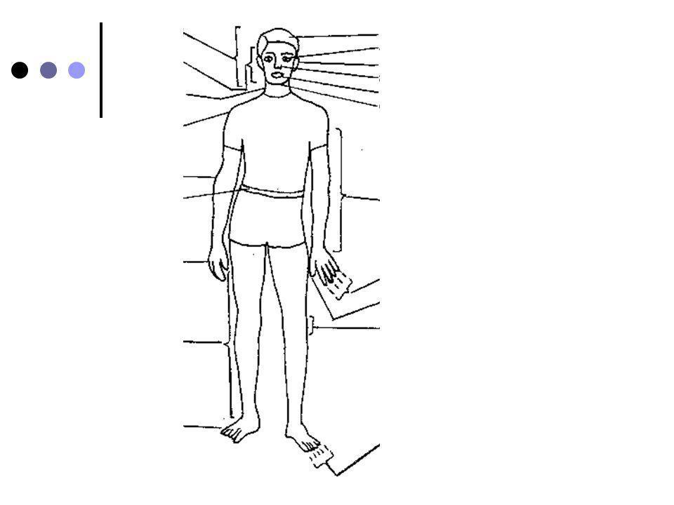 for la tête le visage les cheveux les yeux les oreilles le nez la bouchele cou la gorge lépaule le bras le coude la main les doigts le pouce la jambe le genou le pied le ventre= stomach les orteils le ventre le cœur= heart le dos= back les dents= teeth