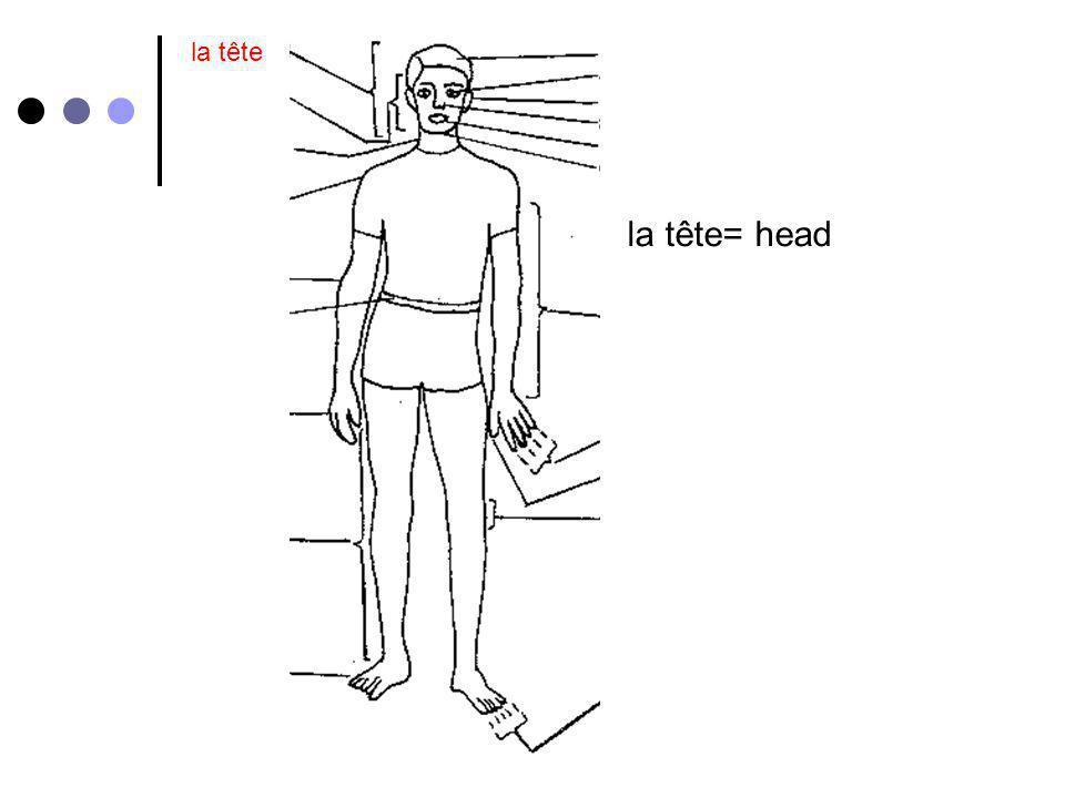 for la tête le coude= elbow le visage les cheveux les yeux les oreilles le nez la bouchele cou la gorge lépaule le bras le coude