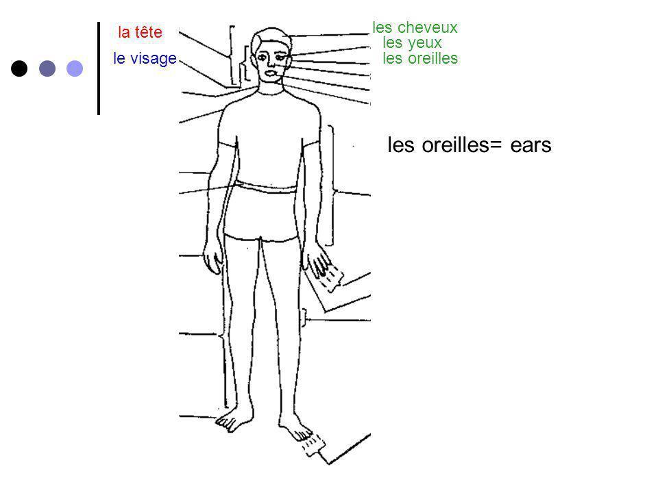 for la tête la jambe= leg le visage les cheveux les yeux les oreilles le nez la bouchele cou la gorge lépaule le bras le coude la main les doigts le pouce la jambe