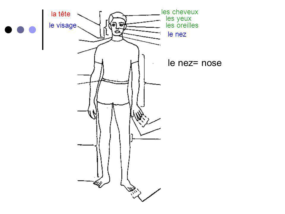 for la tête le genou= knee le visage les cheveux les yeux les oreilles le nez la bouchele cou la gorge lépaule le bras le coude la main les doigts le pouce la jambe le genou