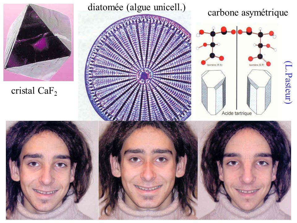 cristal CaF 2 carbone asymétrique (L.Pasteur) diatomée (algue unicell.)