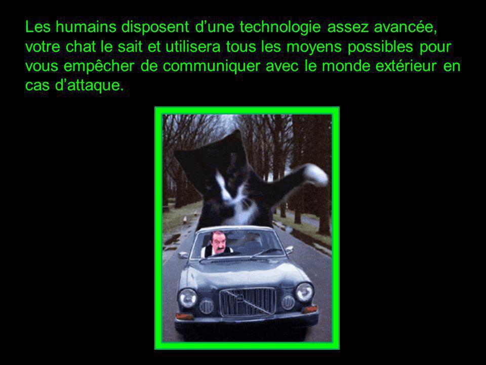 Votre chat dort sur votre matériel électronique.