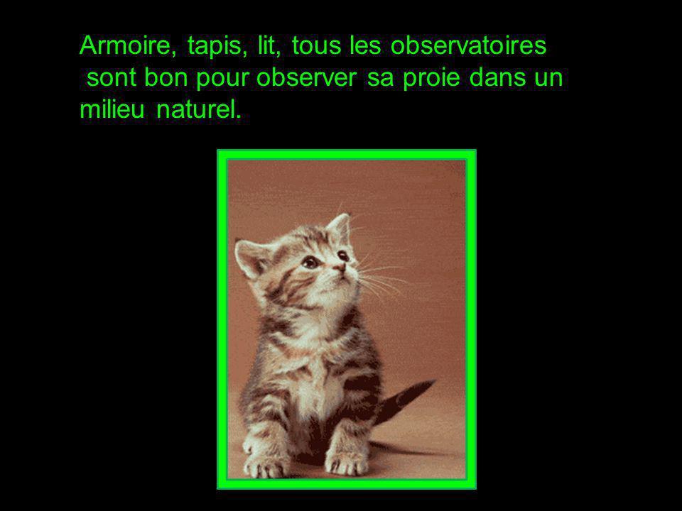 Votre chat se cache dans des endroits sombres pour vous observer.