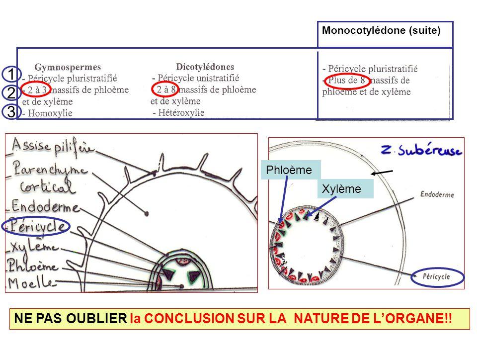 Monocotylédone (suite) NE PAS OUBLIER la CONCLUSION SUR LA NATURE DE LORGANE!! Phloème Xylème 1 2 3