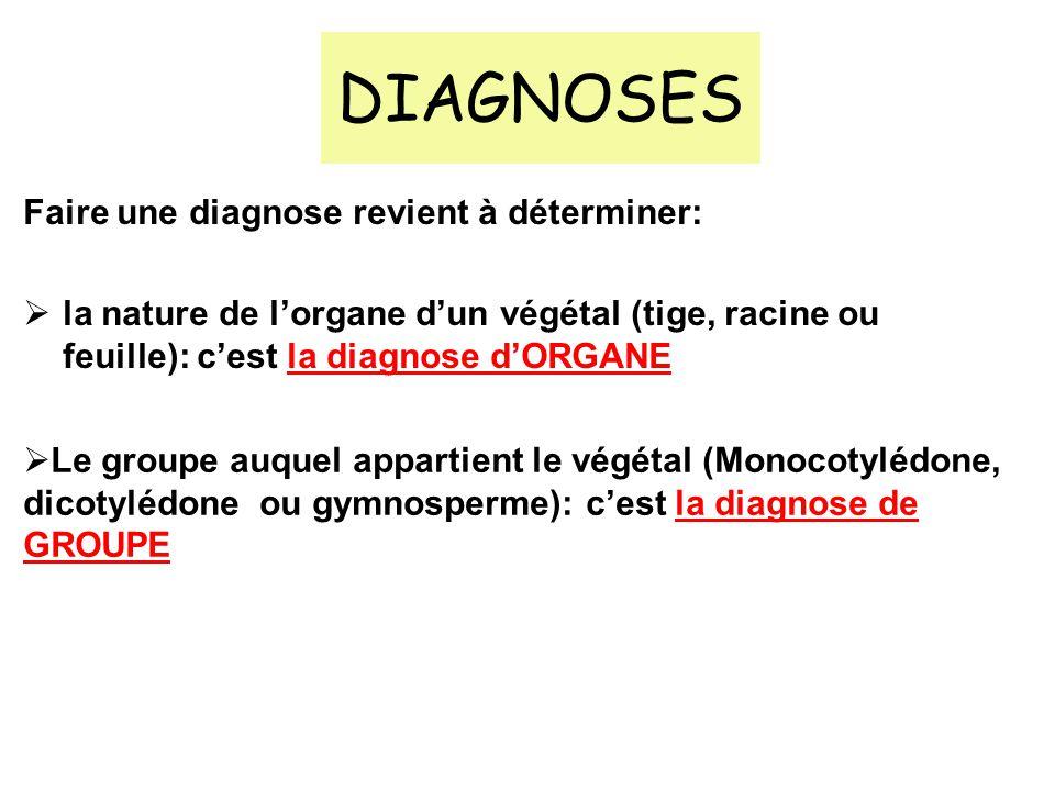 DIAGNOSES Faire une diagnose revient à déterminer: la nature de lorgane dun végétal (tige, racine ou feuille): cest la diagnose dORGANE Le groupe auqu