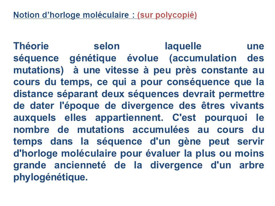 Notion dhorloge moléculaire : (sur polycopié) Théorie selon laquelle une séquence génétique évolue (accumulation des mutations) à une vitesse à peu pr