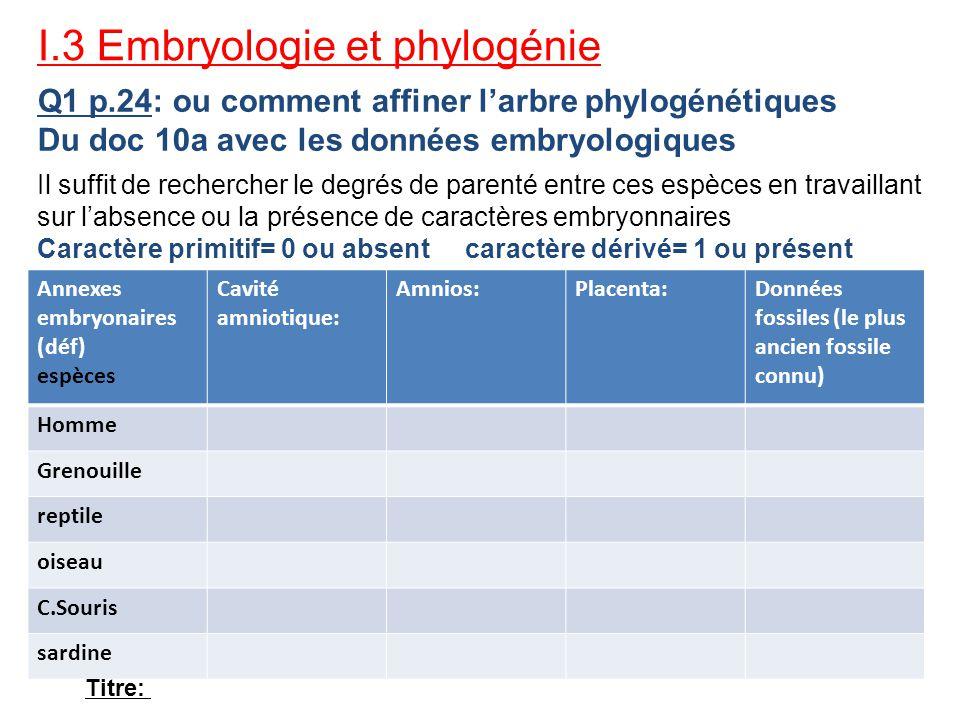 I.3 Embryologie et phylogénie Q1 p.24: ou comment affiner larbre phylogénétiques Du doc 10a avec les données embryologiques Il suffit de rechercher le