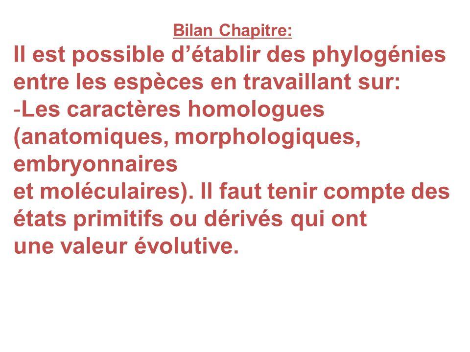 Bilan Chapitre: Il est possible détablir des phylogénies entre les espèces en travaillant sur: -Les caractères homologues (anatomiques, morphologiques