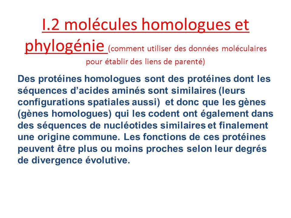 Bilan: La comparaison des séquences des molécules homologues (gène ou protéines) permet détablir ou daffiner des phylogénies (liens de parenté) mais aussi détablir des distances évolutives (géniques) entre les espèces.