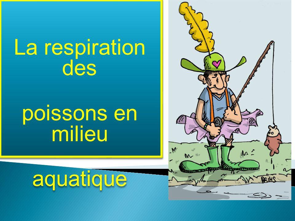 La respiration des poissons en milieu aquatique La respiration des poissons en milieu aquatique