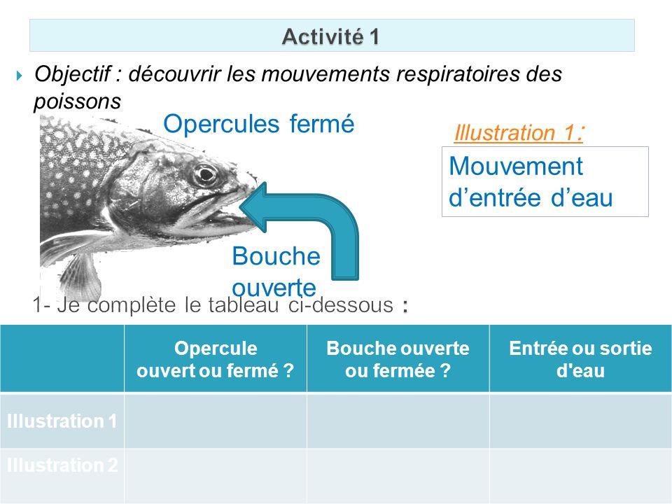Objectif : découvrir les mouvements respiratoires des poissons Illustration 1 : Bouche ouverte Opercules fermé Mouvement dentrée deau Opercule ouvert