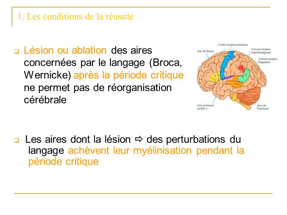 1. Les conditions de la réussite Lésion ou ablation des aires concernées par le langage (Broca, Wernicke) après la période critique ne permet pas de r