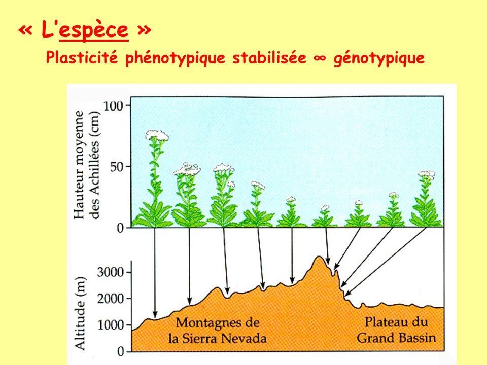 « Lespèce » Définition actuelle possible Un ensemble isolé de gènes circulant dans le temps et lespace, sadaptant continuellement aux variations de lenvironnement ainsi quaux nouvelles conditions quil est susceptible de rencontrer lors de son extension dans de nouvelles régions géographiques voir fin du cours