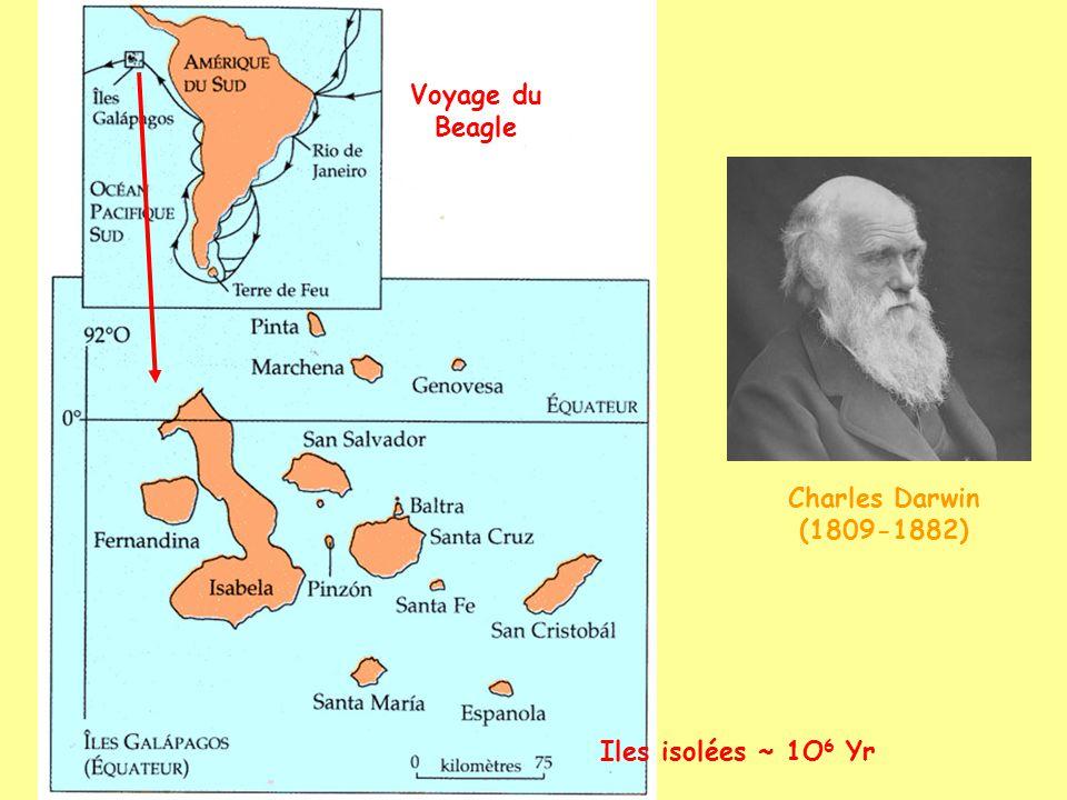 les pinsons des Galapagos 1 couple 5 genres 14 espèces