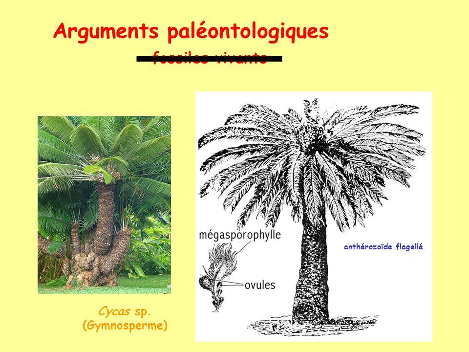 Arguments paléontologiques lignées évolutives (ex: chevaux) taille allongement membre disparition cubitus monodactylie onguligrade allongement face spécialisation mol + prémol développement cerv + cereb