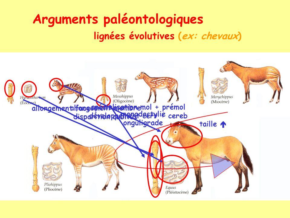 Arguments paléontologiques lignées évolutives (ex: chevaux-2) .