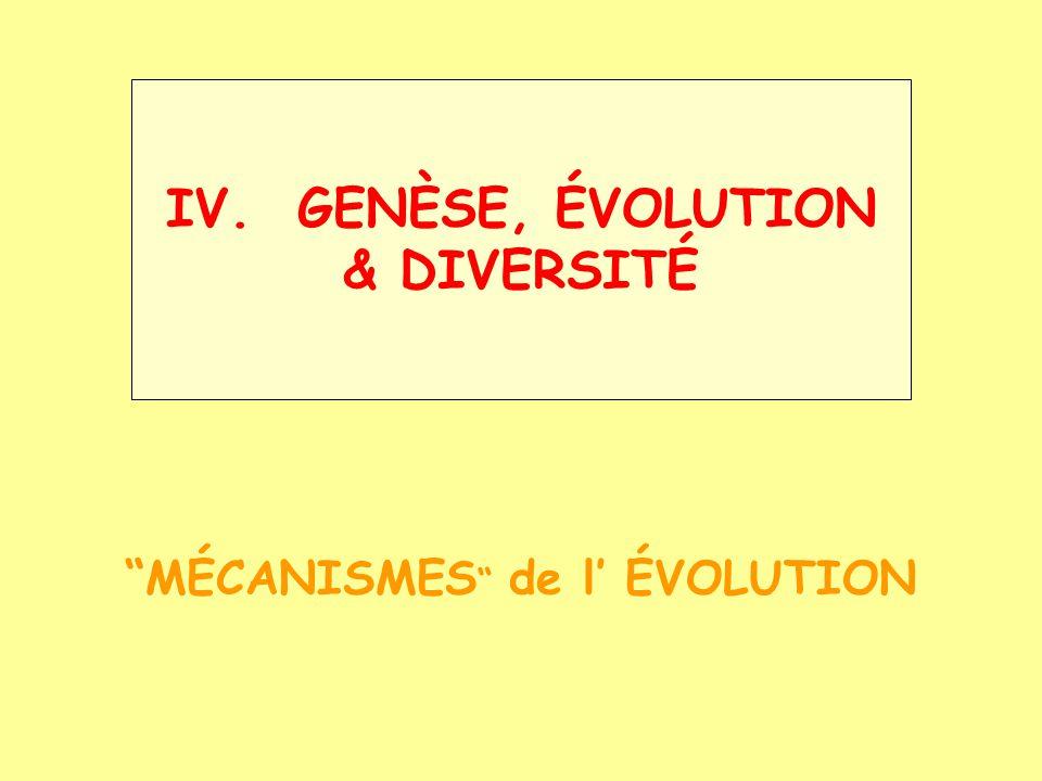 Buffon Georges-Louis Leclerc (1707-1788) ÉVOLUTION - historique Linné : fixisme Buffon : soupçonne lévolution qqs « familles » conçues par la Nature et le Temps (dégénération) E.