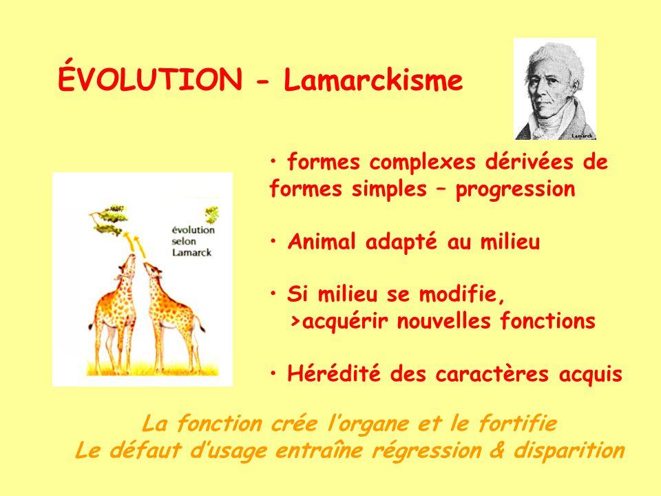 ÉVOLUTION - Darwinisme Influence de Malthus & Comte Les espèces se succèdent dans le temps et lespace Sélection naturelle responsable, en maintenant les formes + adaptées Causes des variation inconnues mais internes à lorganisme